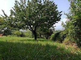 Sgurgola, 60 mq con giardino separato